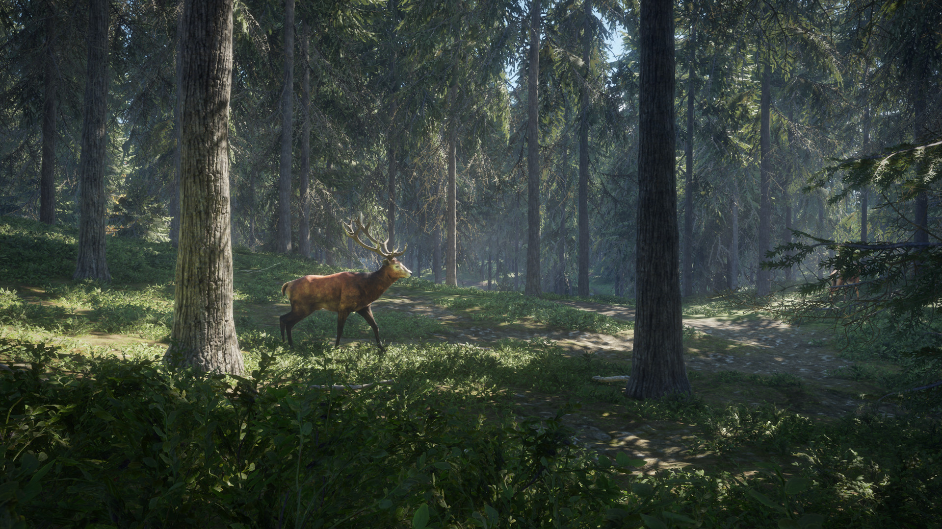 theHunter Call of the Wild Features